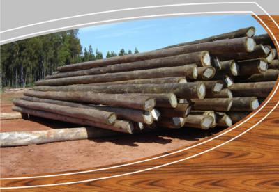 A la biomasa le iría mejor si no fuera tanta madera al vertedero